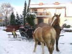 Chmielno - konie